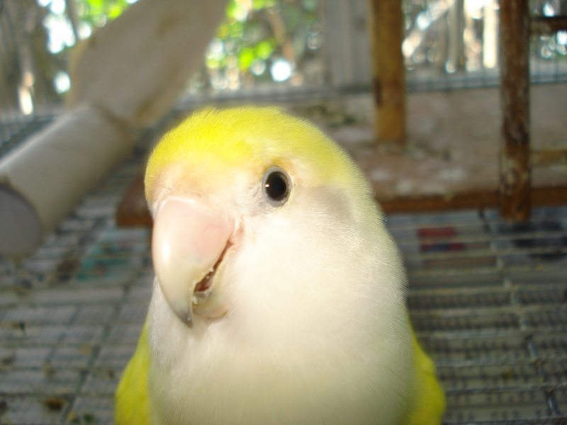 Post your favorite birds - Page 2 3_23_010