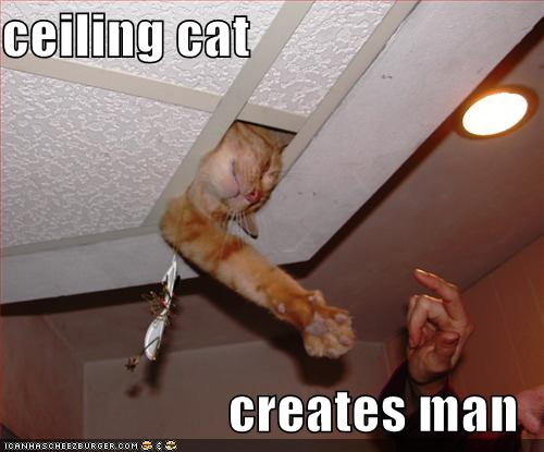 lolcats Ceilin10