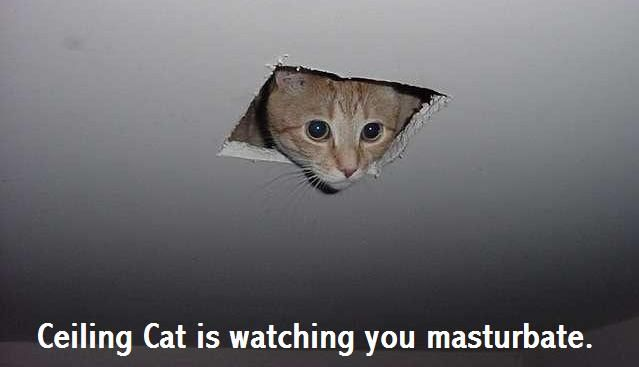 lolcats Ceilin11