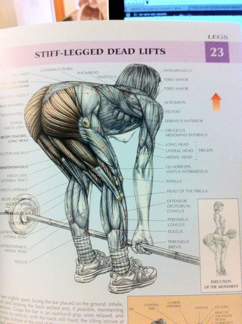 Strength Training Anatomy Img_0710
