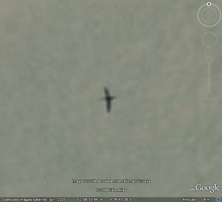 Oiseaux visibles sous Google Earth - Page 4 Cormor10