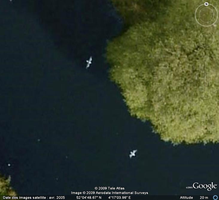 Oiseaux visibles sous Google Earth - Page 4 Mouett10