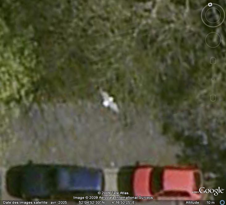 Oiseaux visibles sous Google Earth - Page 4 Mouett11