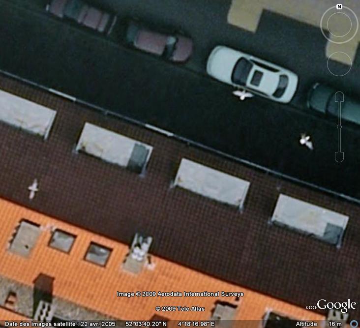 Oiseaux visibles sous Google Earth - Page 4 Mouett16