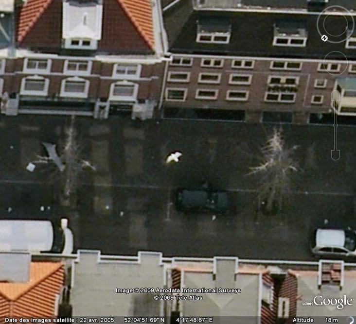 Oiseaux visibles sous Google Earth - Page 4 Mouett17