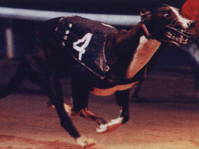 DROOPYS VIERY Greyho17