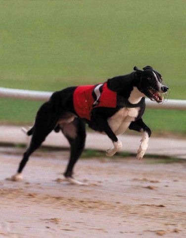 DROOPYS VIERY Greyho18