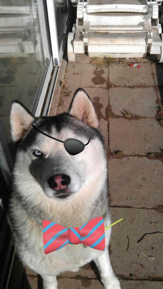 aller petite photos de mes chiens relooké Gtgtgt18