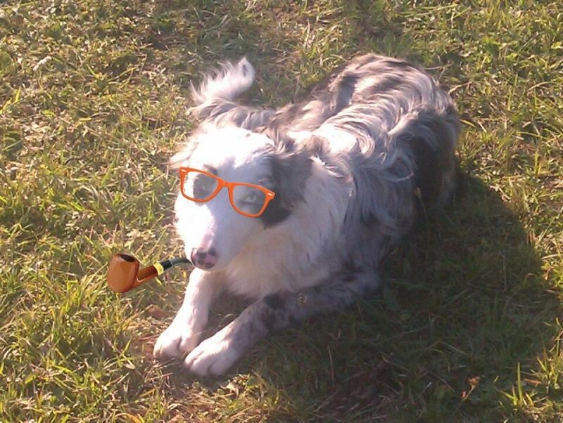 aller petite photos de mes chiens relooké Gtgtgt19