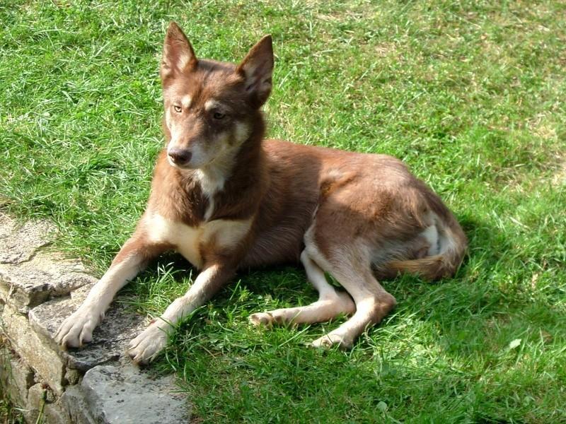 Nos loups grandissent, postez nous vos photos - Page 3 Dscf0210