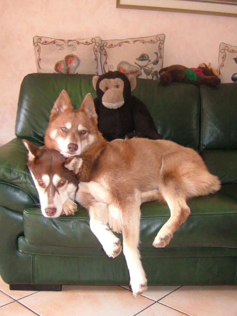 Nos loups grandissent, postez nous vos photos - Page 3 Dscf7010
