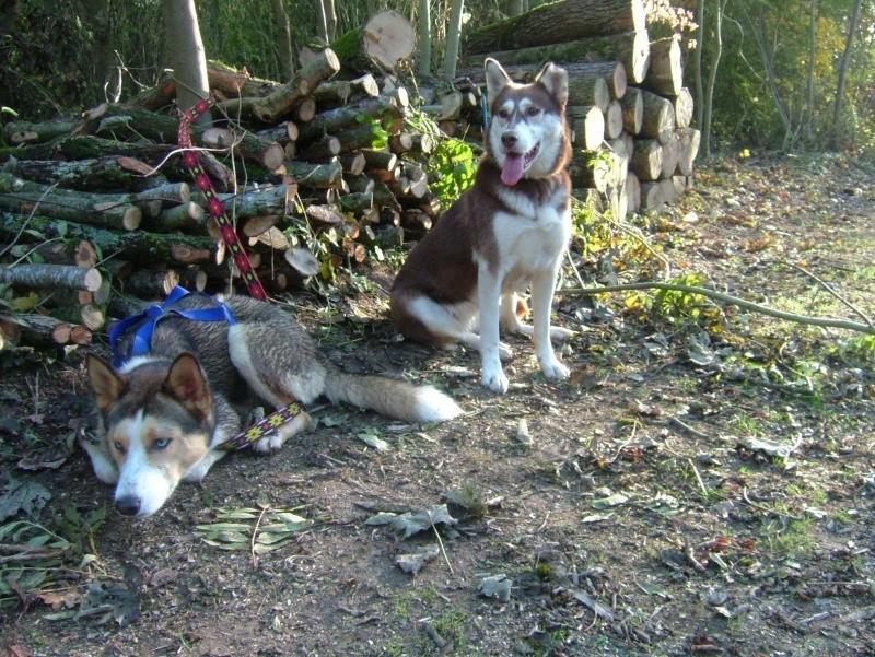 Nos loups grandissent, postez nous vos photos - Page 3 Dscf8628