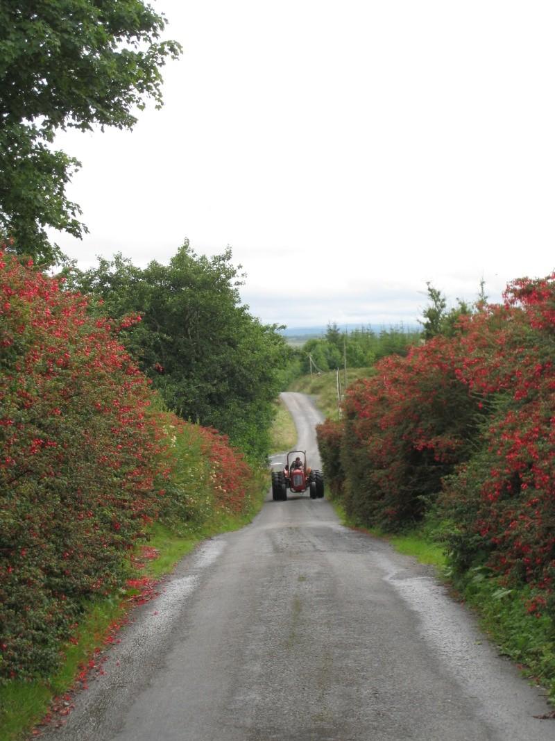 Un petit coin de Burren Img_9110