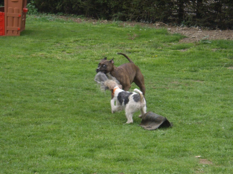 cohabitation fox et autres races  Imgp2818