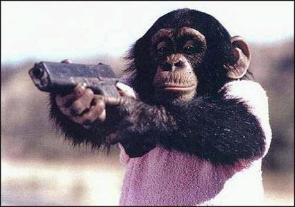 Ménagerie : Le chimpanzé Chimpa10