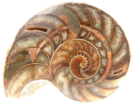 Ménagerie : Fossiles Fossil11