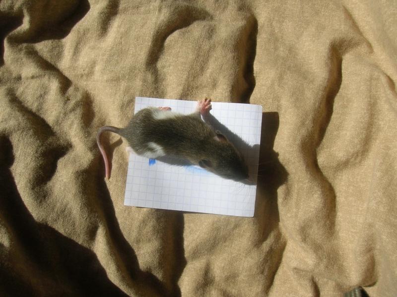 (14) Speed est Maman!! (nvl photos p.28) - Page 15 Dscn3360