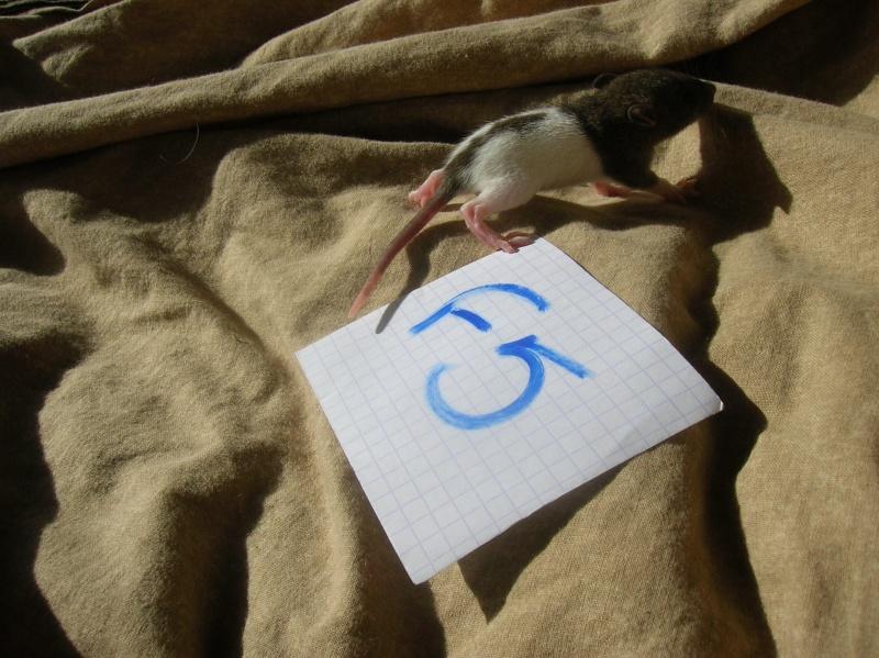 (14) Speed est Maman!! (nvl photos p.28) - Page 15 Dscn3367
