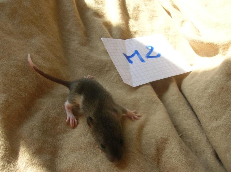(14) Speed est Maman!! (nvl photos p.28) - Page 15 Dscn3410