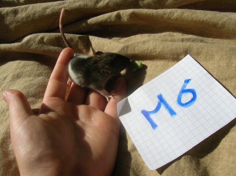 (14) Speed est Maman!! (nvl photos p.28) - Page 15 Dscn3421