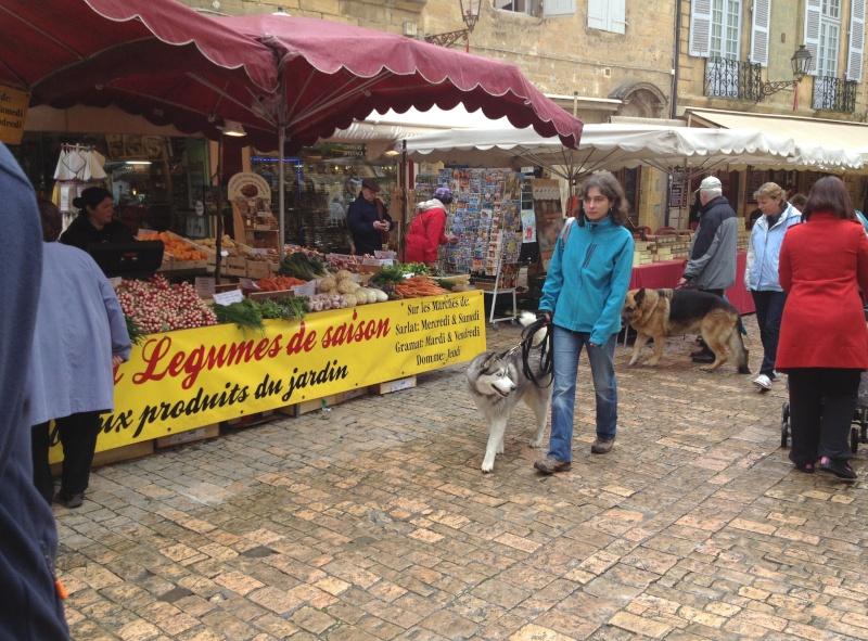 Escapade avec Baltik  en Dordogne dans le perigord noir Sarlat12