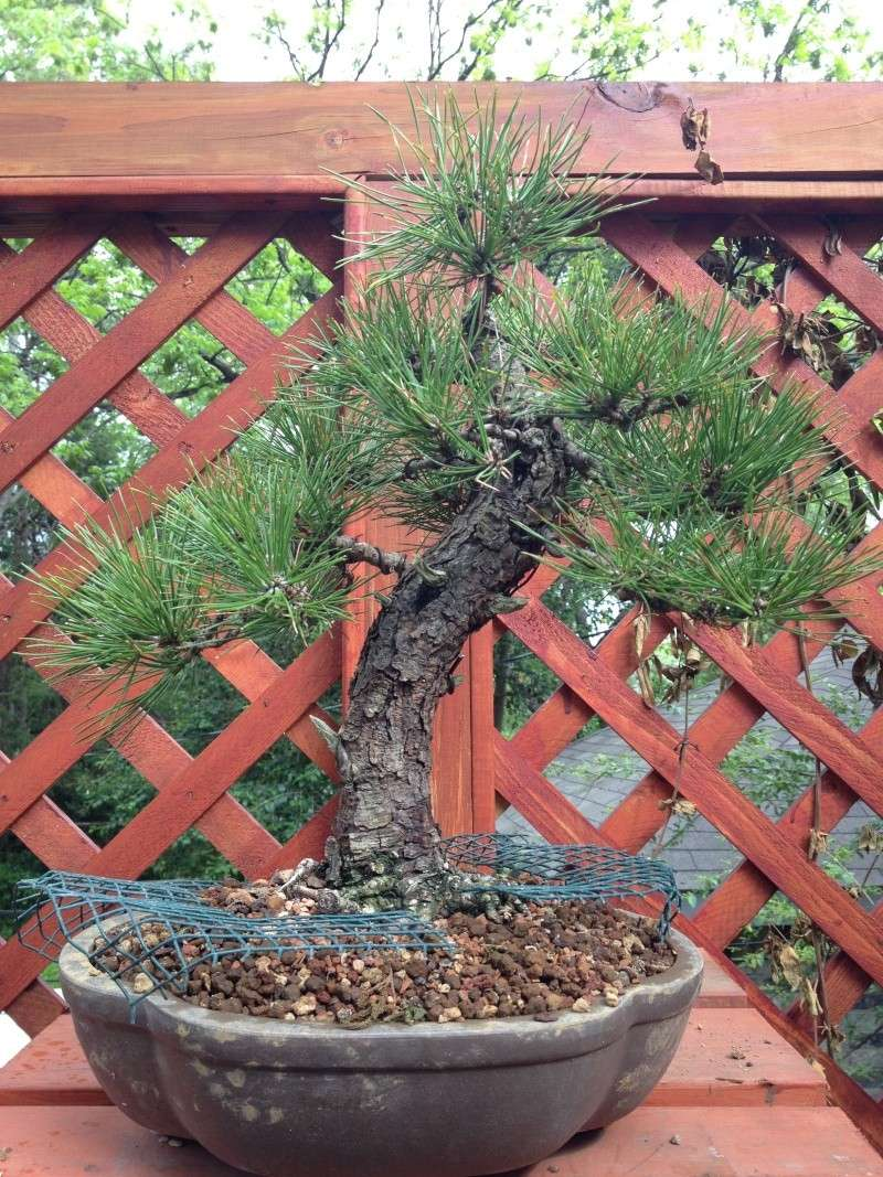 Pine Problem - Page 2 2013-011