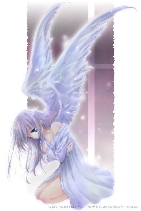 The Hikari Clan Angel410