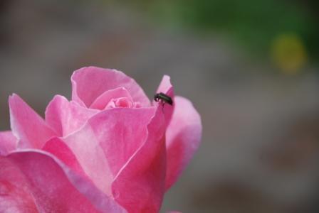 algunas flores y plagas 1011