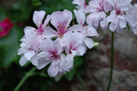 algunas flores y plagas 211