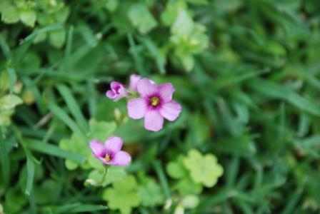 algunas flores y plagas 510