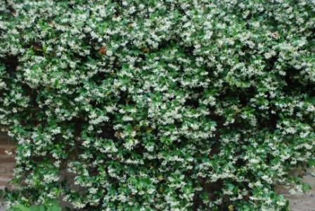 algunas flores y plagas Dsc13310