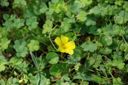 algunas flores y plagas Dsc13610