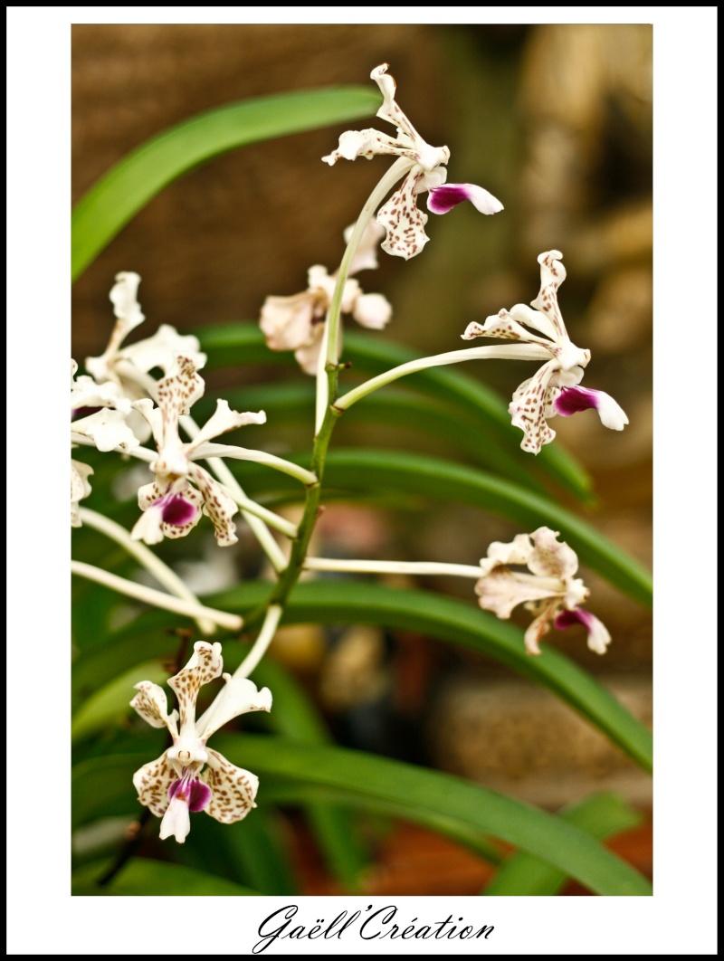 Pour les amoureuses d'orchidées B10