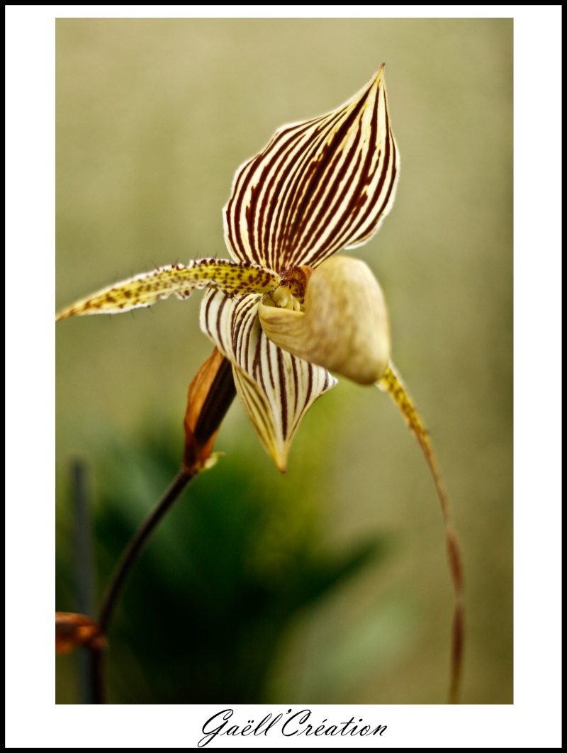 Pour les amoureuses d'orchidées C10