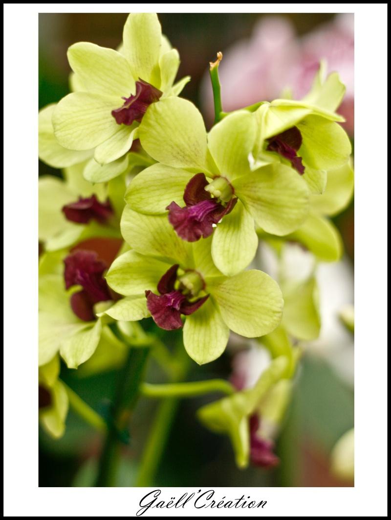 Pour les amoureuses d'orchidées D10