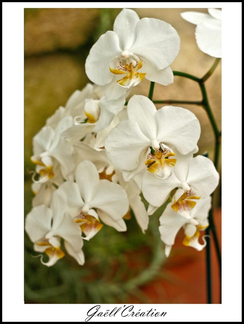 Pour les amoureuses d'orchidées E10