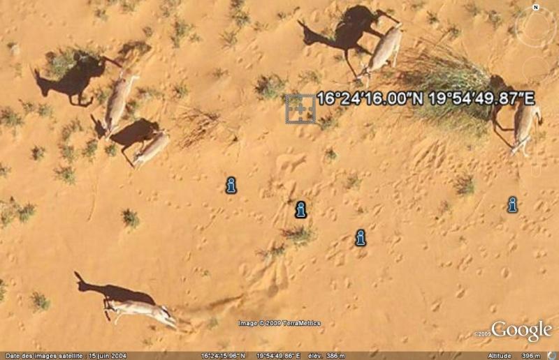 gazelles Gazell10
