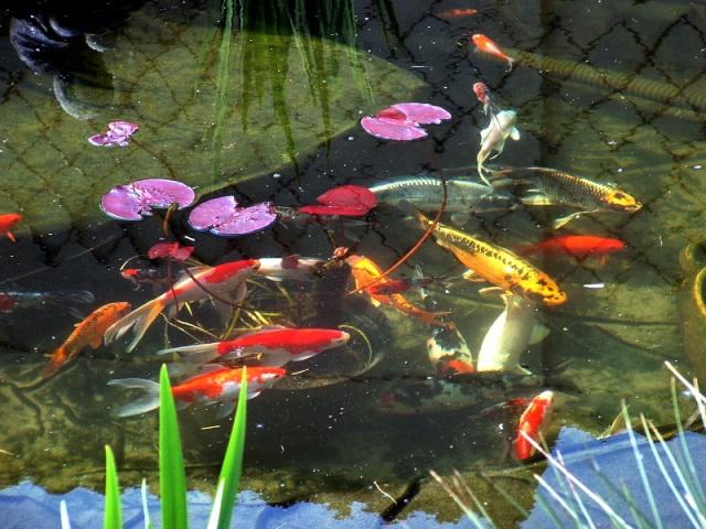 Votre  photo pour Octobre 2009 Bassin10