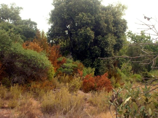Garrigue aride Dscn3615