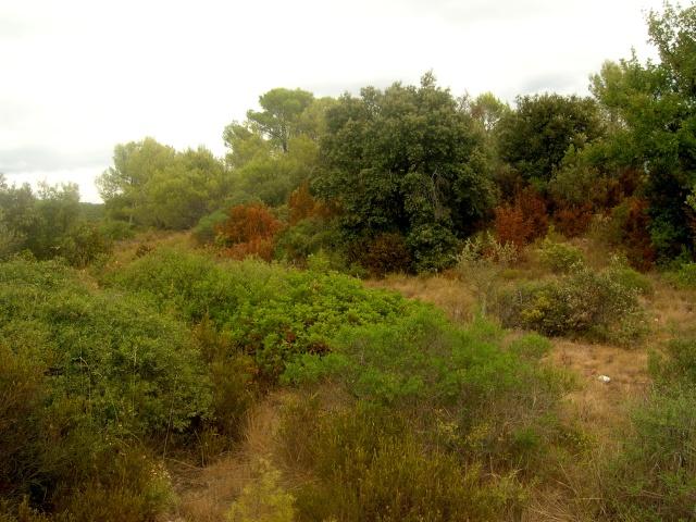 Garrigue aride Dscn3620