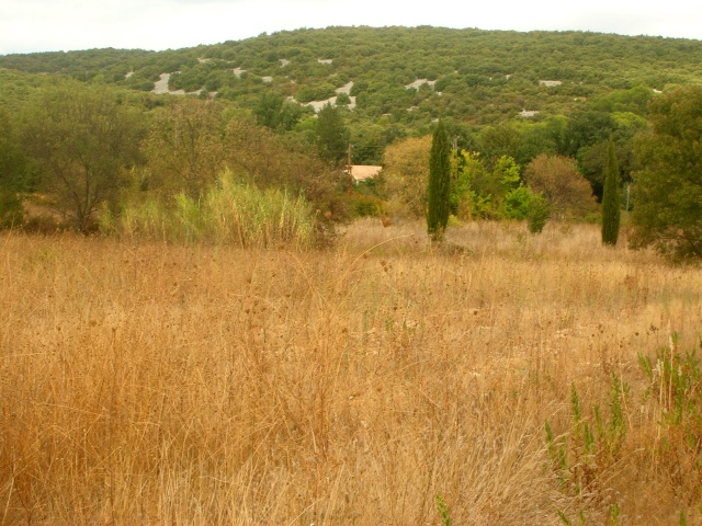 Garrigue aride Dscn3621