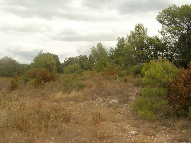 Garrigue aride Dscn3622