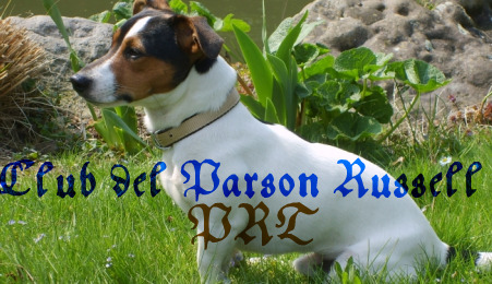 Club Del Parson Russell Terrier(PRT)