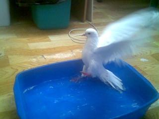 Bath day for PMV birds Image105