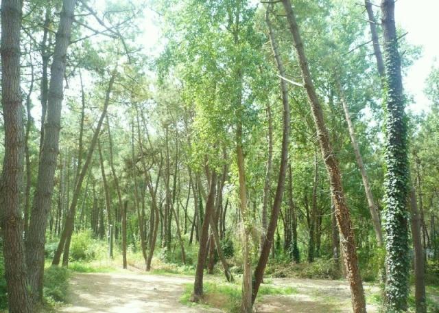 La nature en quelques photos P1040918