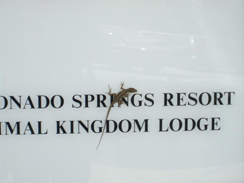 Critters of Coronado Sept0913
