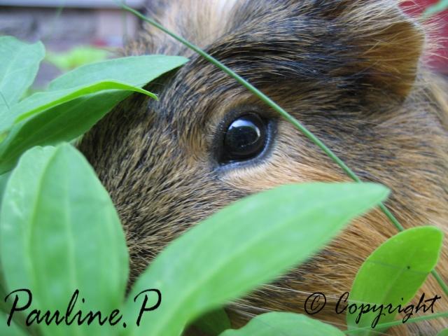 ~Plusieurs photos de chons, chien, chakals, cheval etc ~ Photo_14
