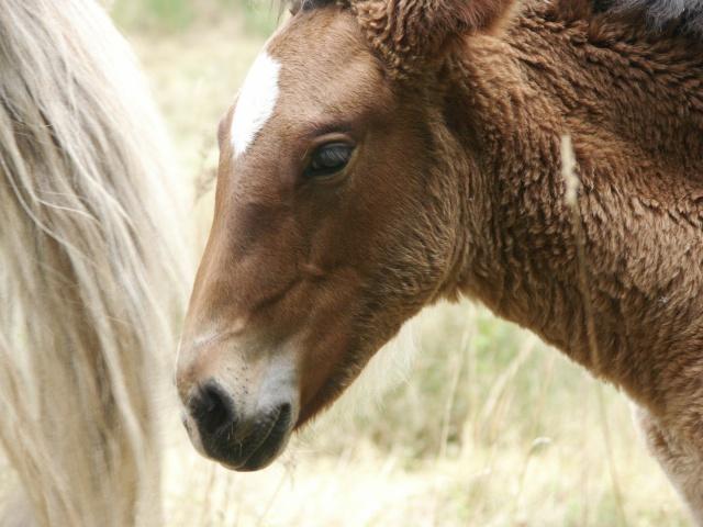 ~Plusieurs photos de chons, chien, chakals, cheval etc ~ Pict0111
