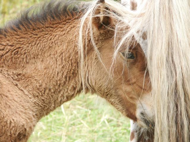 ~Plusieurs photos de chons, chien, chakals, cheval etc ~ Pict0112