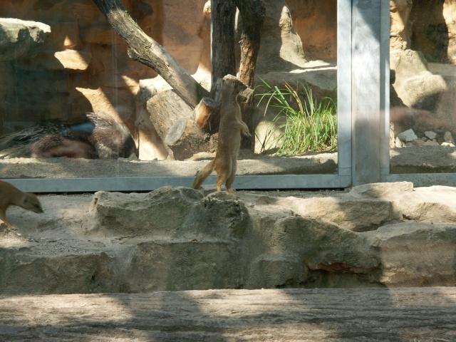 ~Plusieurs photos de chons, chien, chakals, cheval etc ~ Pict0212